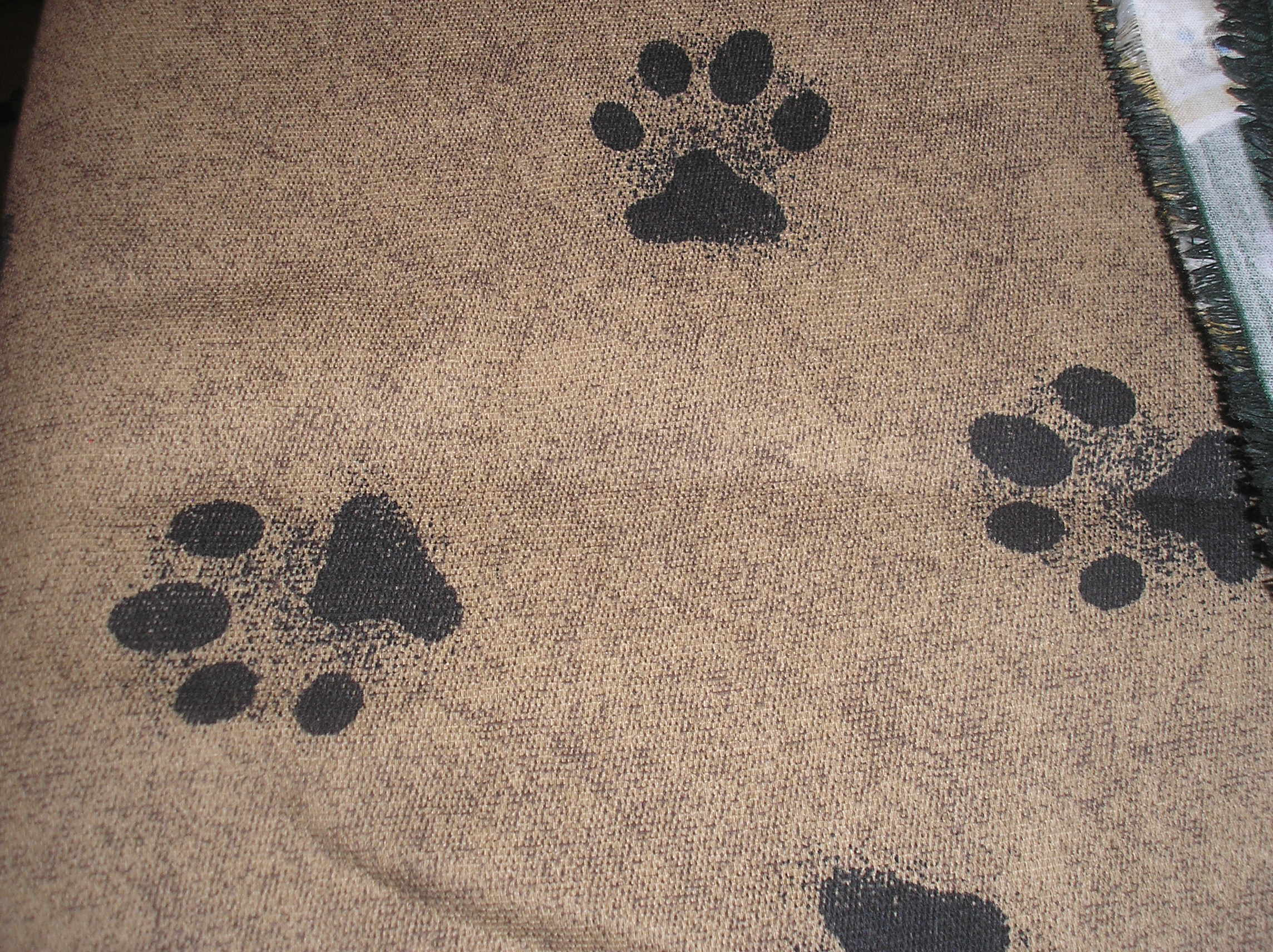 large paw prints